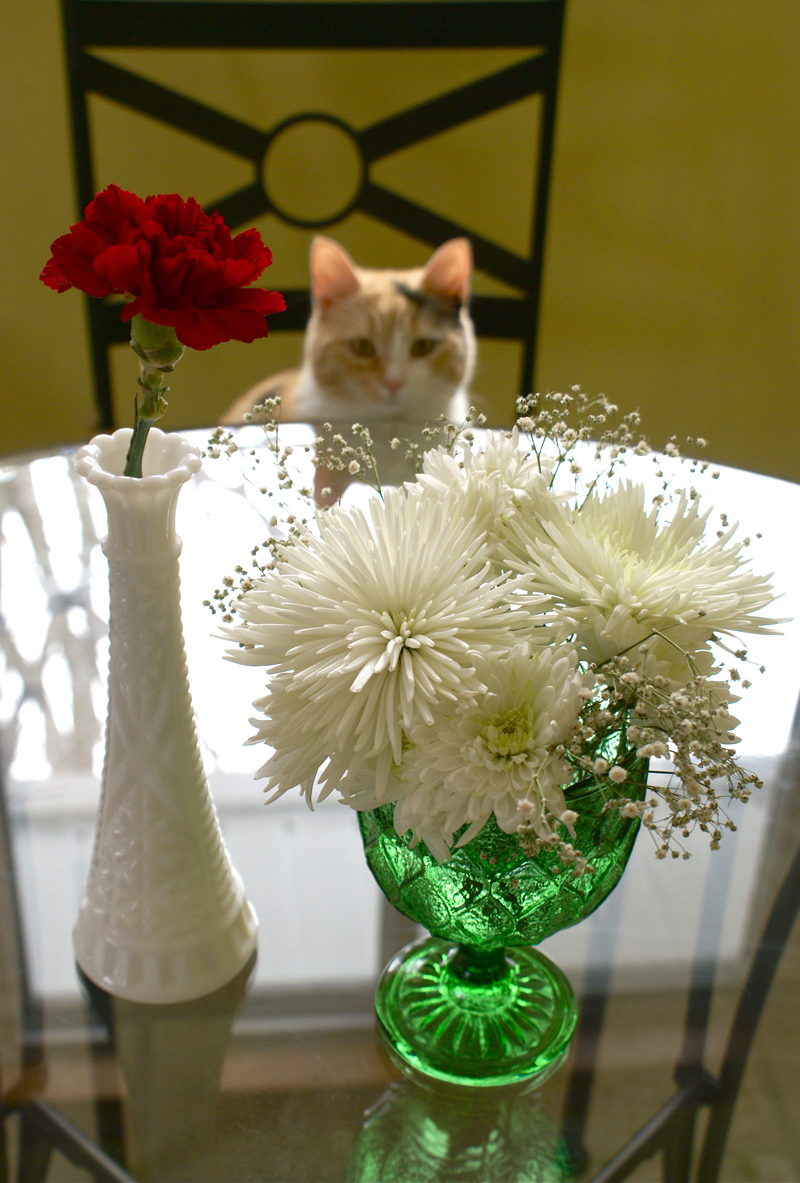 A photo of flowers ended up being a lot cuter than anticipated