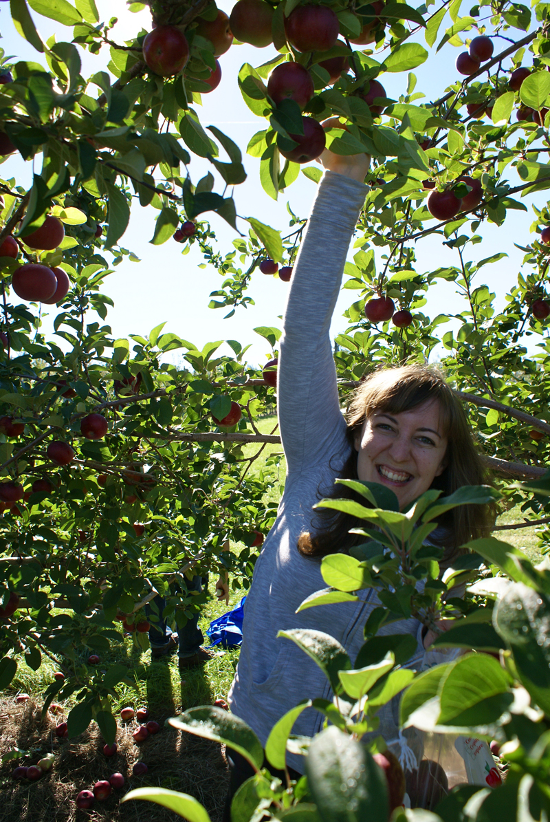 I'm in your trees, picking your apples.