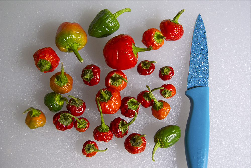 Our time bomb peppers just before they were made into jelly